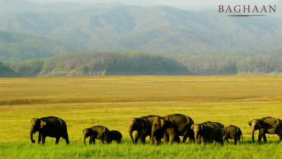 jim corbett place near delhi